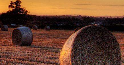 万博亚洲网址:高效生态农业助农增收